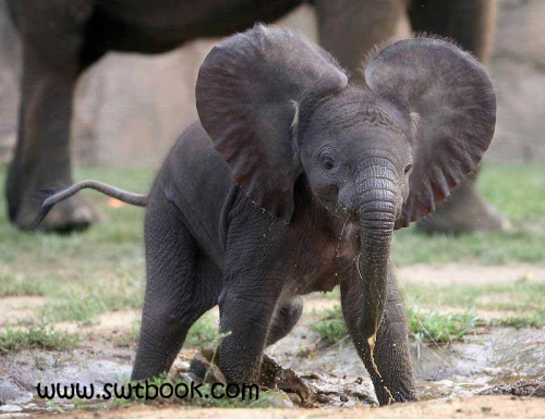 little elephant,swt,swtbook,sweet,little hati,chota hati,elephant in forest,little elephant in forest,forest animal,animal in forest